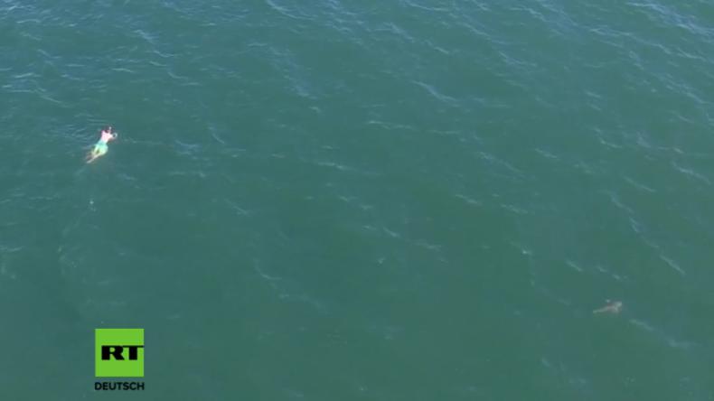 USA: Mann schwimmt der Polizei davon und wird stattdessen von Hai verfolgt