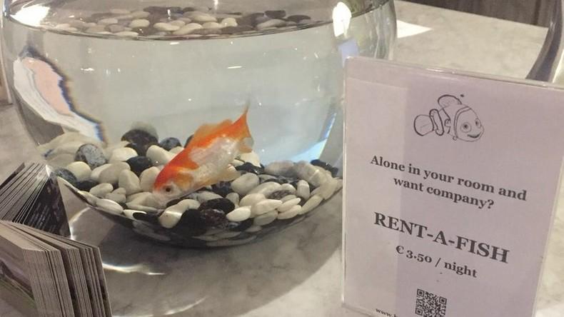 Belgisches Hotel findet Trost für einsame Gäste