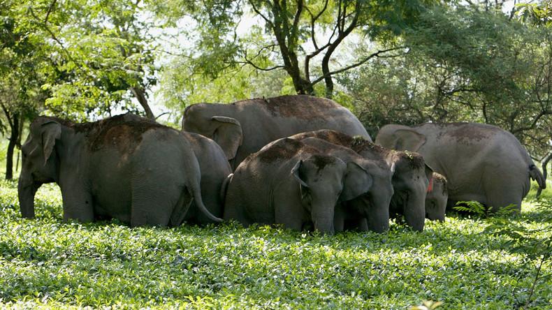 Grausame Bilder aus Indien: Elefant zertrampelt Selfie-Liebhaber [VIDEO]