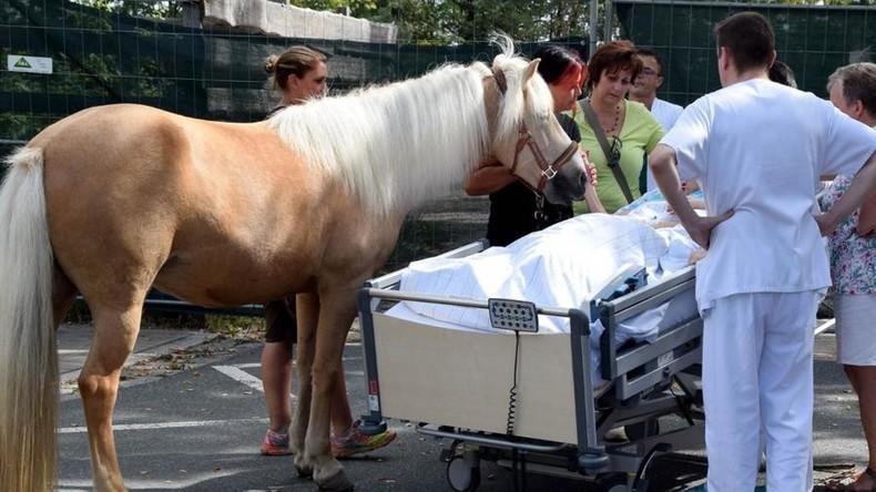 Wahre Freundschaft: Pferd besucht sterbende Frau im Krankenhaus