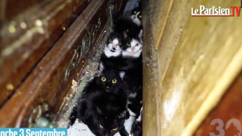Tierquälerei: 130 Katzen in Pariser Wohnung entdeckt [VIDEO]