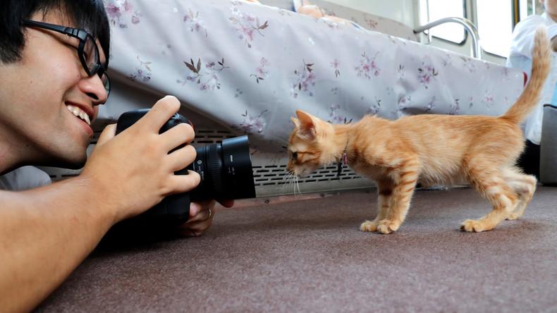 """Schnurrende Fahrt: Erster """"Katzen-Zug"""" fährt in Japan ab [VIDEO]"""