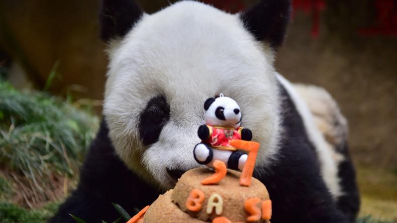 Weltweit ältester Pandabär in China gestorben
