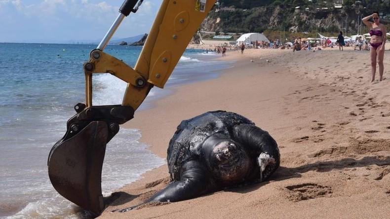 Strandüberraschung: 700 Kilogramm schwere Lederschildkröte in Spanien entdeckt