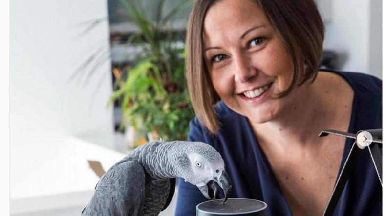 Selbständiger Papagei bestellt Geschenkverpackung bei Amazon für elf Euro