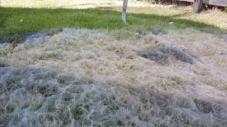 Gekommen um zu bleiben: Australische Familie entdeckt riesiges Spinnennetz unter Kindertrampolin