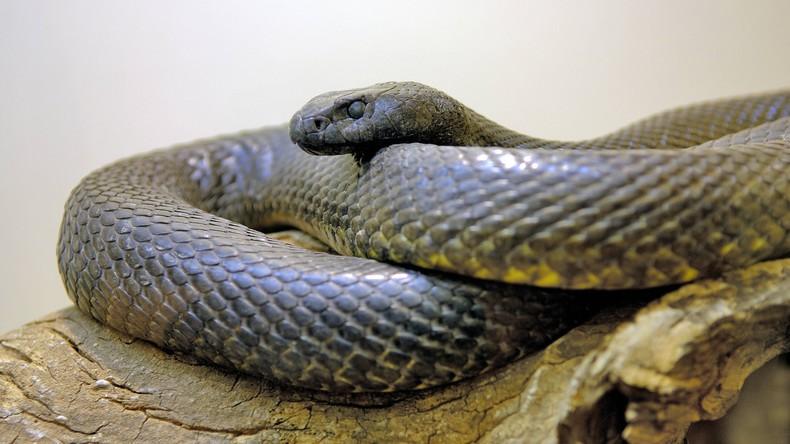 Viraler Griff ins Klo: Mann zieht Schlange mit bloßen Händen aus Schüssel [VIDEO]