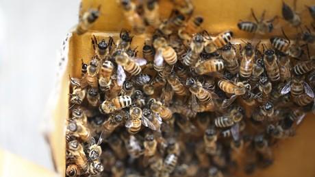 Kanadier lässt sich von Bienen bedecken und stellt neuen «Bienenbart»-Rekord auf [VIDEO]