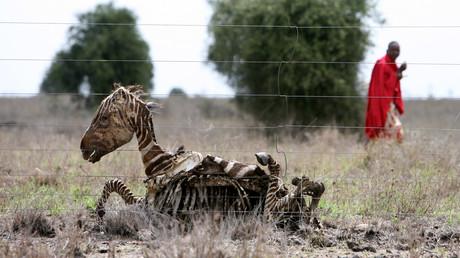 Die meisten Betroffenen leben in Afrika (243 Millionen) und Asien (520 Millionen). Millionen Kinder leiden als Folge von Hunger an Mangelerscheinungen. Auch in der Tierwelt werden die Folgen zerstörter Vegetation und Felder sichtbar.