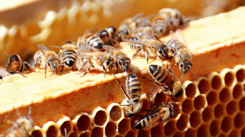 Studie: 75 Prozent des weltweiten Honigs enthalten Pestizide