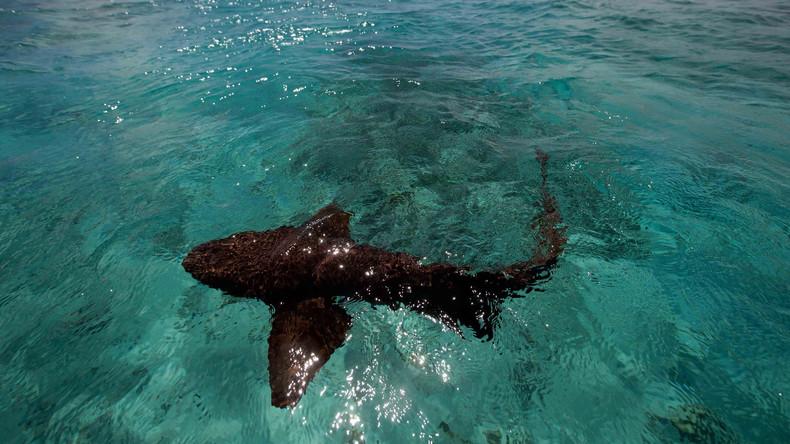 Australierin fängt Hai mit bloßen Händen in flachem Wasser und bringt ihn ins freie Meer