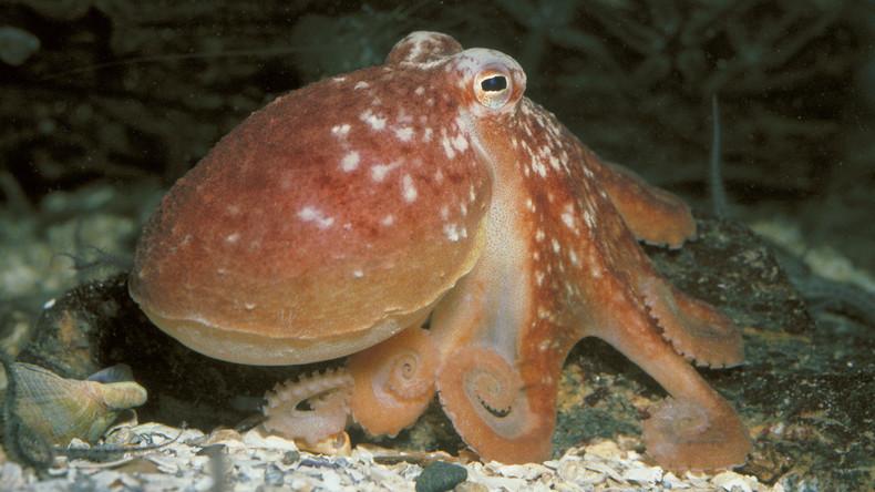 Kraken inspirieren Entwicklung neuen Materials zur Tarnung