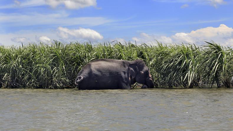 Vier Tote nach Elefantenattacke in Rohingya-Flüchtlingslager in Bangladesch