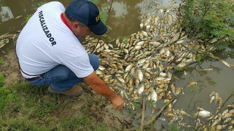 Massenhaftes Fischsterben in Paraguay: Behörden sprechen von Sauerstoffmangel als Ursache [VIDEO]