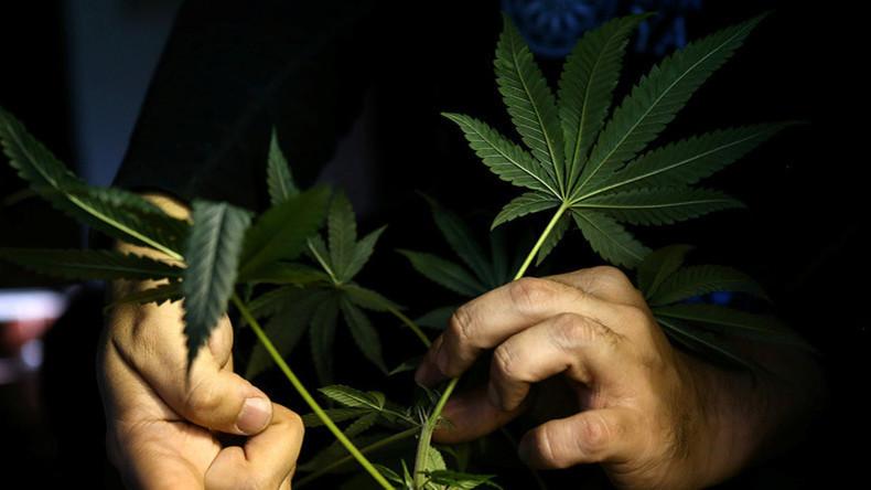 Erfreuliches mit Nebenwirkungen: Marihuana rettet zwar Leben, verändert aber das Gehirn