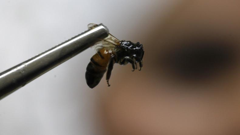 Neue Studie bestätigt: Dramatisches Insektensterben in Deutschland - Rätseln über Ursachen