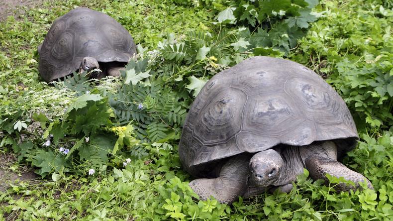 Schildkrötenpaar erweist sich nach 26 Jahren Beziehung als homosexuell