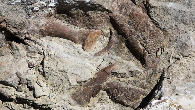 """In Utah gefundenes Tyrannosaurierfossil gilt als """"vollständigste Entdeckung im Südwesten der USA"""""""