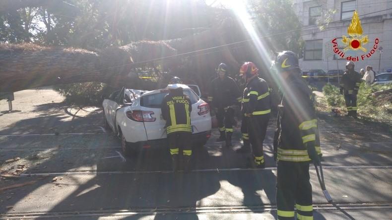 Baum fällt auf Taxi in Italien - Fahrer verletzt