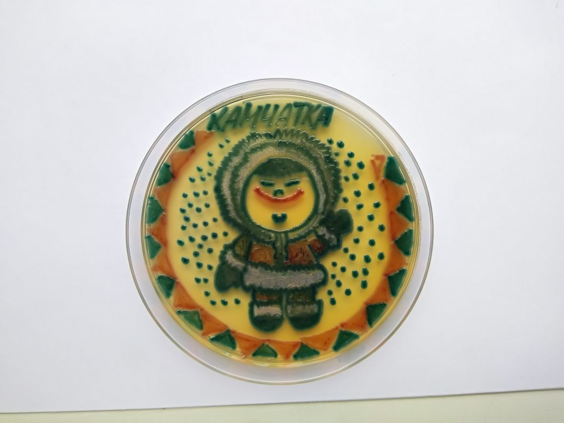 Russische Mikrobiologen erschaffen Bilder aus Bakterien und Pilzen [FOTOS]