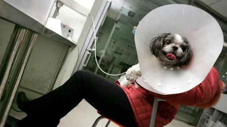 Eine Frau kümmert sich um ihren kranken Hund in Peking; 23. Januar 2006.