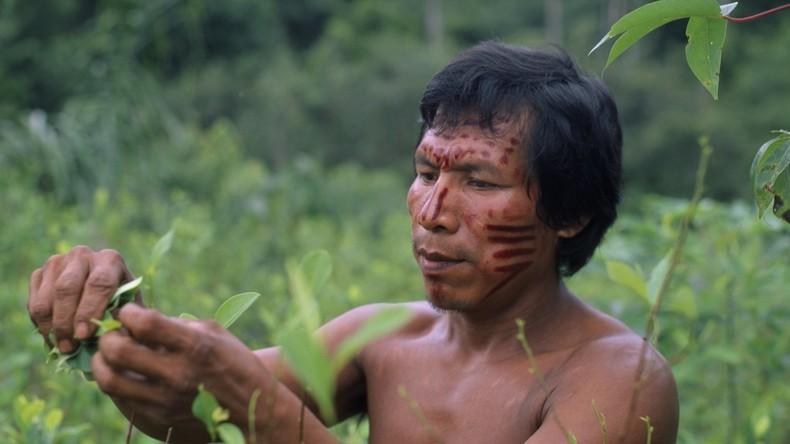 Kakao und Kaffee statt Kokain: UN will Kolumbien mit historischem Abkommen gegen Kokaanbau helfen
