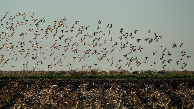 Usutu-Virus rafft Dutzende Vögel in Deutschland hinweg