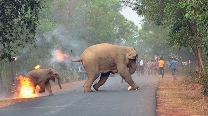 Elefantenmutter und Kind mit brennenden Bällen beworfen: Bild bekommt Preis bei Fotowettbewerb