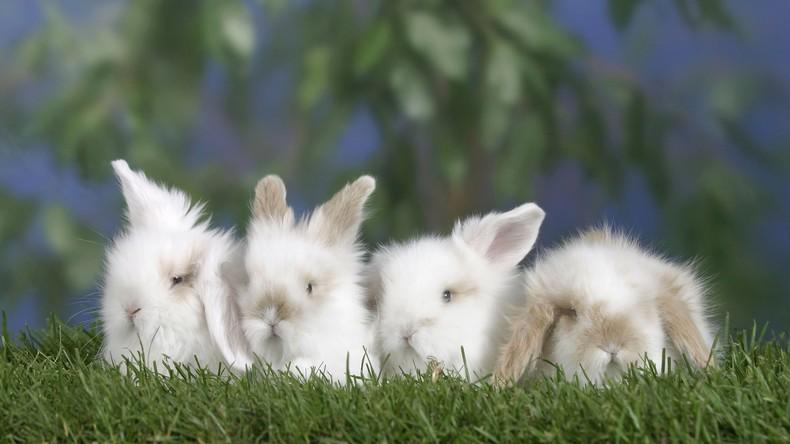 """""""Beispiel an Kaninchen nehmen"""": Polens Regierung ermuntert Bürger zum Kinderreichtum"""