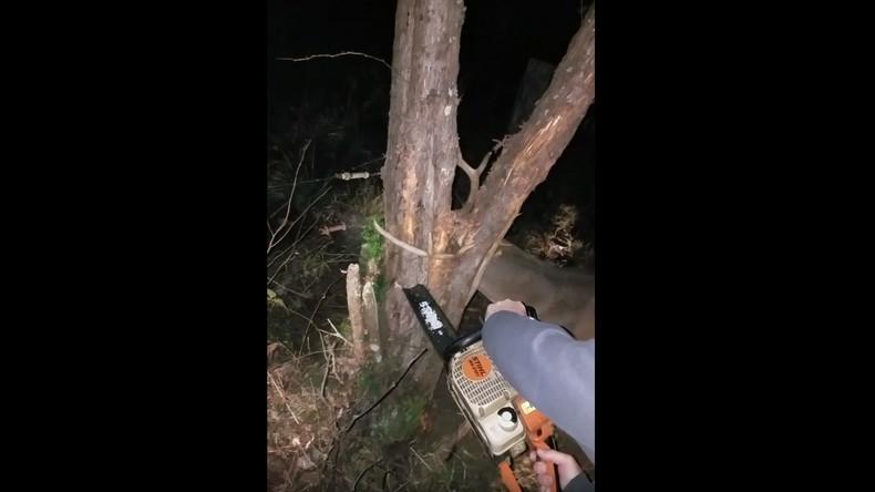 Hilfe statt Blutgericht: US-Jäger retten Hirsch mit Kettensäge