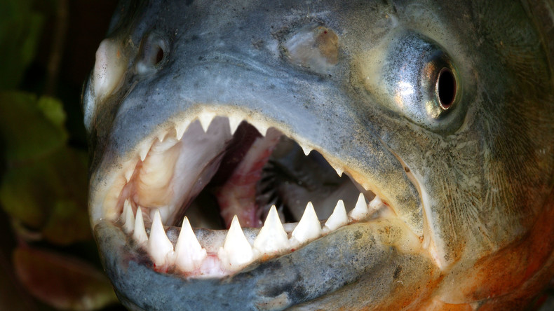 Rückwirkung: Antidepressiva machen Fische aggressiver - US-Forscher