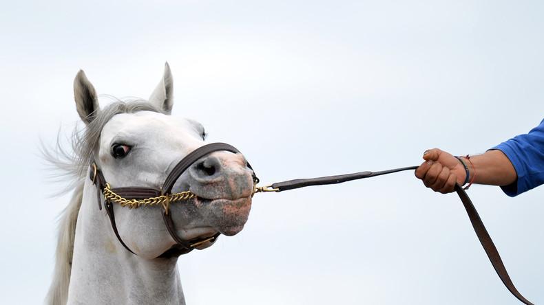 Harte Strafe für nur einen Fehltritt: Pferd beschädigt Auto und kommt hinter Gitter in Brasilien