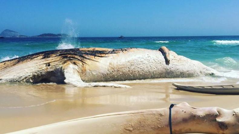 Toter Wal am Strand am Strand von Rio fasziniert Touristen