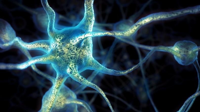 Prothese für die Grauen Zellen: Forscher setzten Gehirn-Implantate für besseres Gedächtnis ein