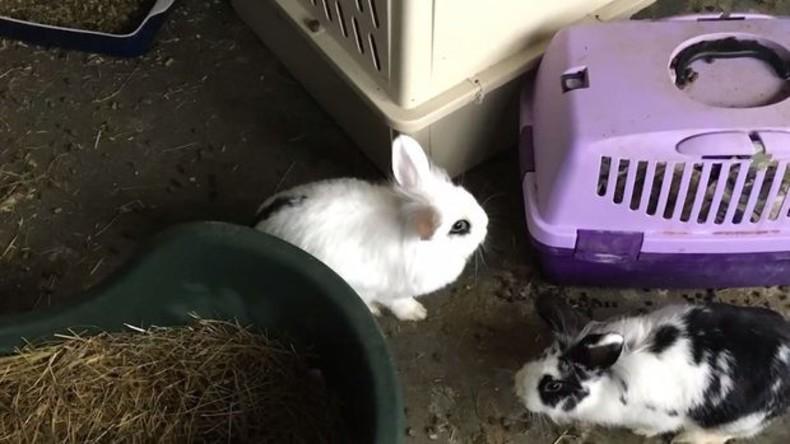 46 Kaninchen in Einzimmerwohnung in Dänemark entdeckt, einige todkrank