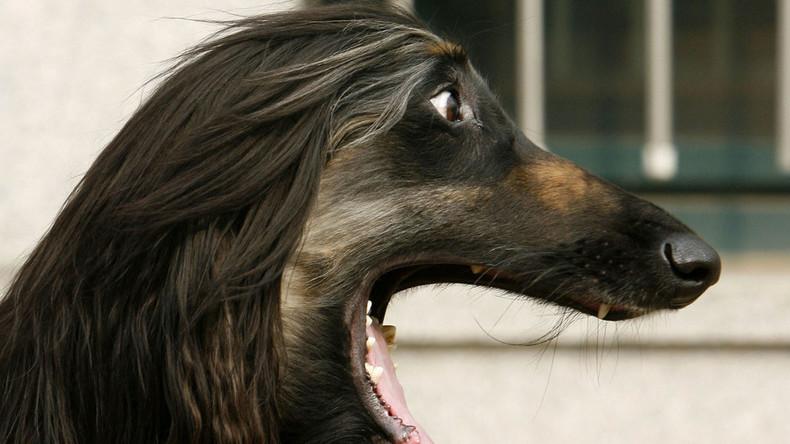 Copy und paste: Wissenschaftler klonen geklonten Hund