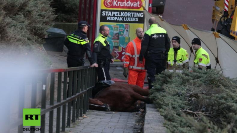 Niederlande: Polizeipferd stirbt am Rande von Pegida-Protest und Gegenkundgebung