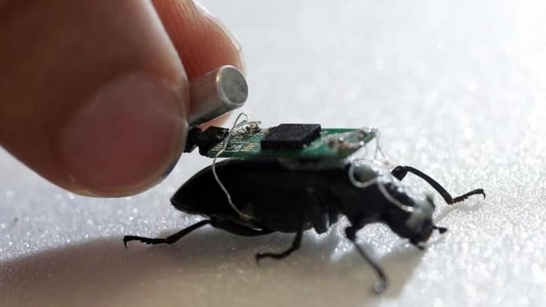 Wissenschaftler: Kleinster Cyborg-Käfer der Welt kann Menschen aus Trümmern retten