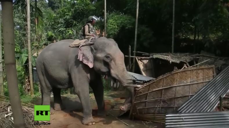 Lebende Bulldozer: Indische Polizisten reißen mithilfe von Elefanten Häuser illegaler Migranten ab