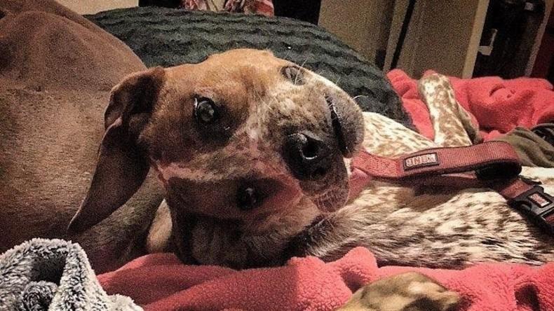 """""""Armes Tier"""": Internetnutzer rätseln über Hund mit scheinbar deformiertem Kopf"""