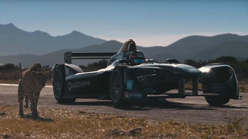 Formel 1-Bolid oder Gepard: Wettbewerb zwischen Auto und Tier