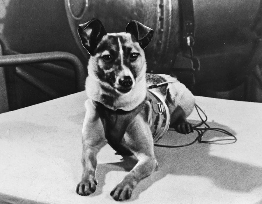 Ikone der Raumfahrt: Vor 60 Jahren flog die sowjetische Weltraumpionierin Laika in den sicheren Tod