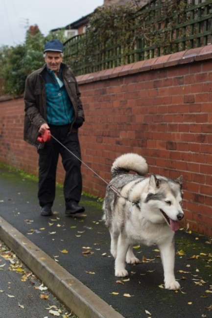 """""""Zu fett"""": Englisches Gericht spricht Hund von Angriffs-Vorwurf frei"""