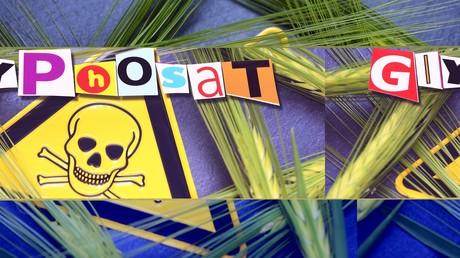 Getreideähren und Gefährdungszeichen, Symbolfoto für den Einsatz von Unkrautvernichtungsmitteln in der Landwirtschaft.