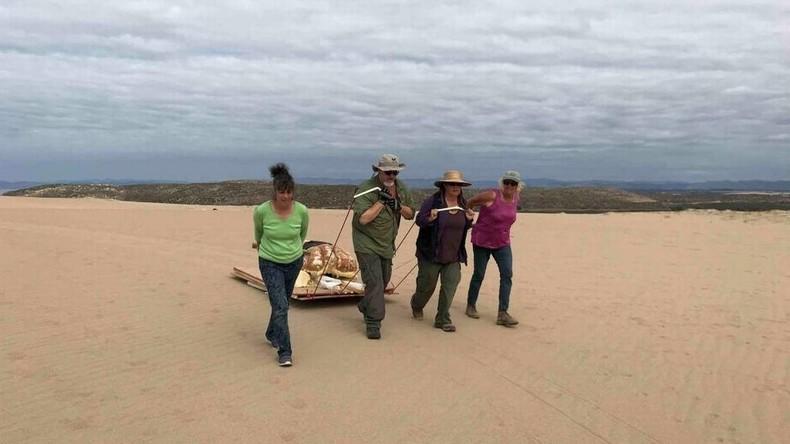 """US-Archäologen graben """"Sphinx""""-Kopf in Kalifornien aus"""