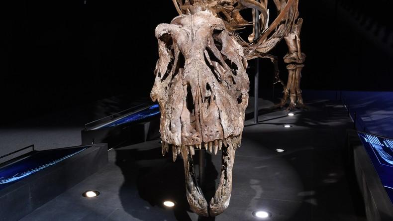 """Wie T-Rex wahrscheinlich klang - Wissenschaftler erzeugen """"unheimlichsten Laut der Welt"""""""