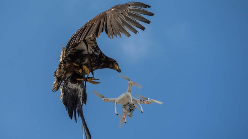 Niederlande lösen Antidrohnen-Einheit aus Adlern auf