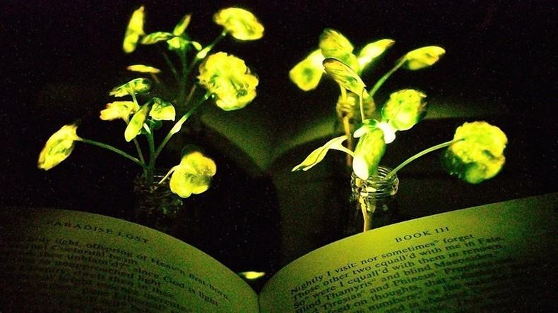 Glühwürmchen-Enzyme können Pflanzen zum leuchten bringen