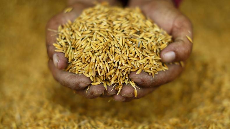 Babynahrung aus Reis mit Arsen belastet