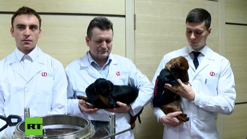 Erschreckend und beeindruckend zugleich – Russland präsentiert mit Dackeln Unterwasseratmung